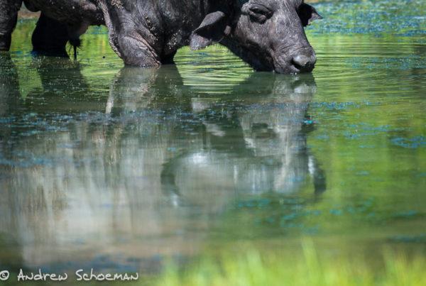 Phinda private Photographic Safari part 2
