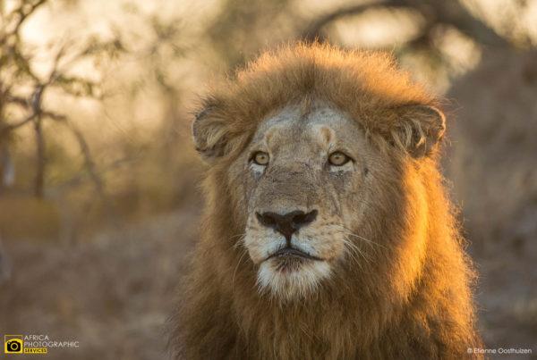 Tintswalo Safari July 2017 48